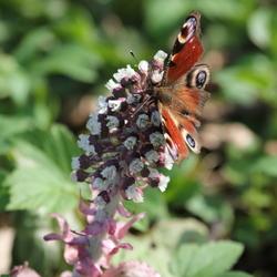 Deze hele mooie vlinder gespot op een bloem