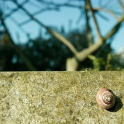 Boeke Snail