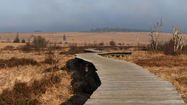 Hoge Venen - Het beschermde natuurreservaat van de Hoge Venen in Belgie , is een van de unieke hoogveenlandschappen in Europa. De voorbije eeuwen werd