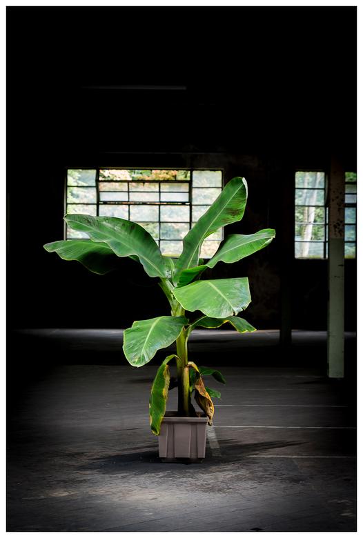 Plant in het licht.