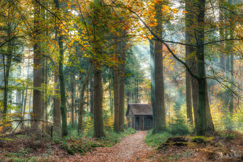magical forest - mooie herfstsfeer in dit Veluwse bos<br />