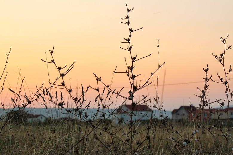 Zonsondergang Bosnië - Zonsondergang in Bosnië, takken vol met slakjes
