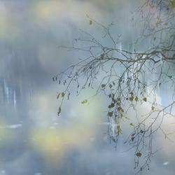 de laatste herfstbladeren