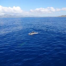 Uitzicht met dolfijn