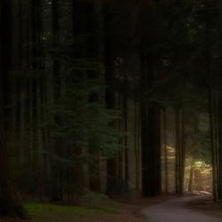 Diep in het donkere (Speulder)bos