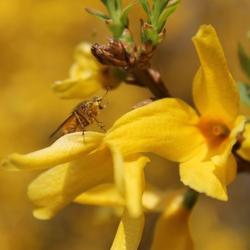 Beestje op een mooie plant