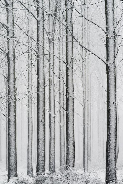 White Wold - Wat een feest vandaag.<br /> Het zag er prachtig uit met de dikke laag sneeuw