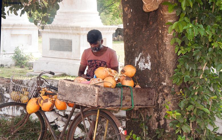 kokosnoot verkoper 1903078803Rmw - de verkoper hakt met hakmes klein kapje van de Kingcoconut steekt er een rietje in en je hebt onbewerkt vers cocosw