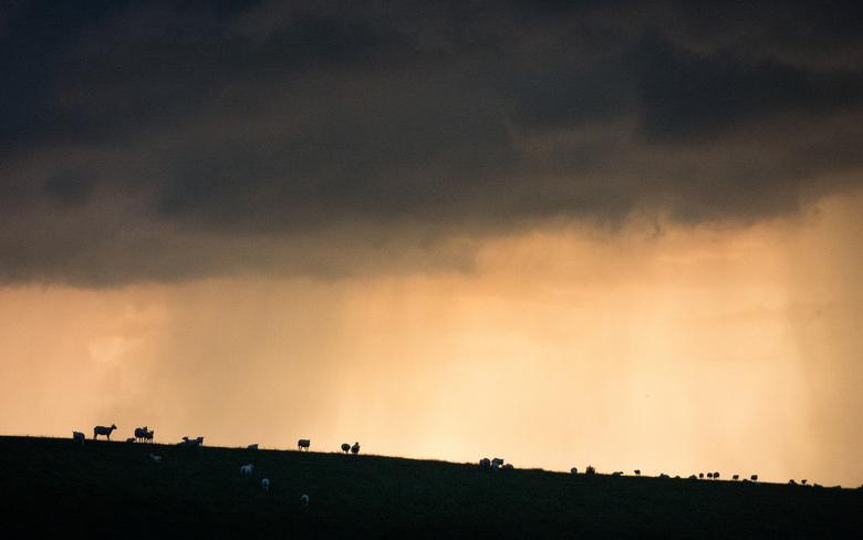 Onweer - Waarde - Schapen op de dijk (nabij Waarde, Zeeland) terwijl een onweersstorm voorbij raast.