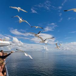 Meeuwen Noordzee