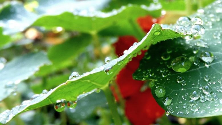 na de regen -