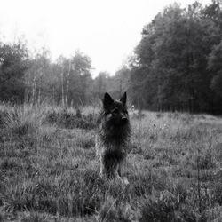 Nog een plaatje van de hond