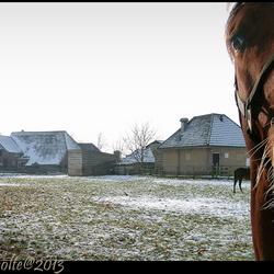 ALMEN paarden