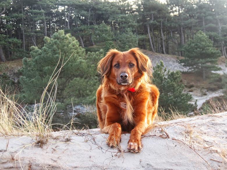 Gaudi - Mijn [ Spaanse ] hond Gaudi , als je hem zo ziet zou Goudi ook een goede naam zijn geweest