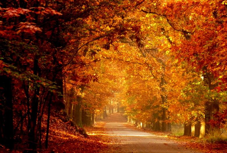Warme kleuren landschap foto van jannyg zoom.nl
