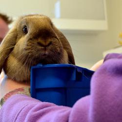 konijnendoktor
