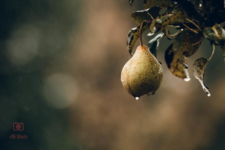Herfst sf(p)eer - Eenzame peer in de herfst