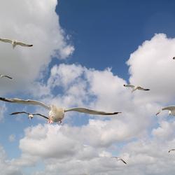 Vliegen met de meeuwen