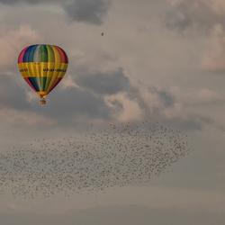 Ballon met zwerm (plevieren)