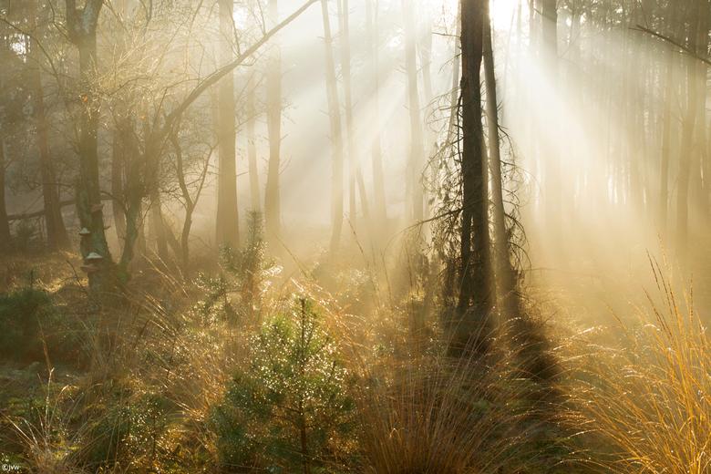 Mystieke sfeer in het bos