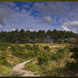 Landschap kennemerland