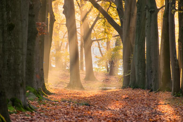 Zonneharpen  - Op een koude morgen mooie harpen in het bos