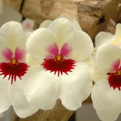 """Bloody Flowers"""
