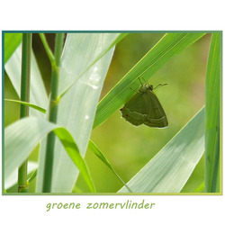 groene zomervlinder  zoomdag 25 juni