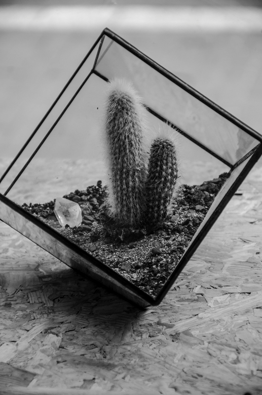 Restored - cactus bij #restored