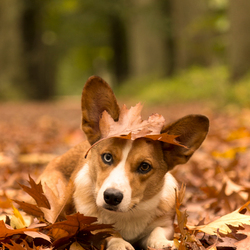 Camouflage hond