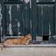Kat op het Griekse eiland Rhodos