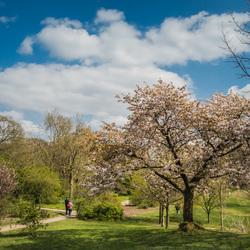 Arboretum Belmonte.2