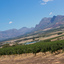 DSC07346 - Banhoek view
