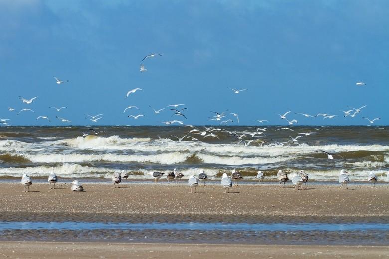 Strandzicht.jpg - een zwerm meeuwen het strand bij IJmuiden