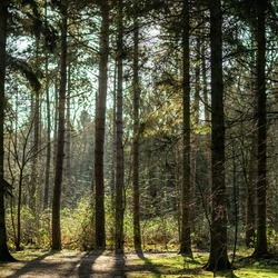 Bomen van Clingse bossen