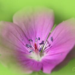 mooi bloemetje