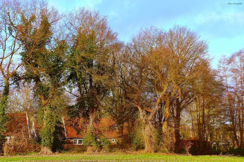 DSC_0630   achter de bomen. - Ons mooie Twente.<br /> wonen onder oude bomen.