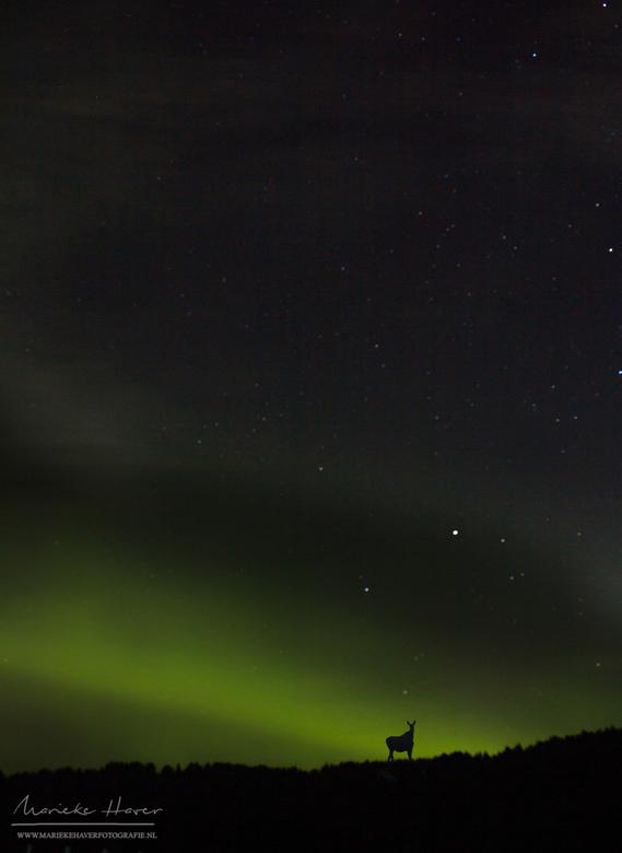 Swedisch Nature - 23 augustus verscheen het Noorderlicht bij de Sun Dance Ranch in Zweden. En wat verscheen daar nou, een eland?! <br /> <br /> Een