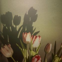 tulpjes in de zon