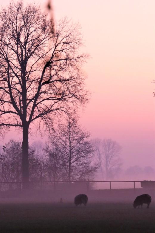 zonsondergang - zonsondergang met mist <br /> 3-12-2019