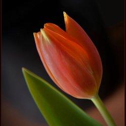 Voorjaarsbloem.