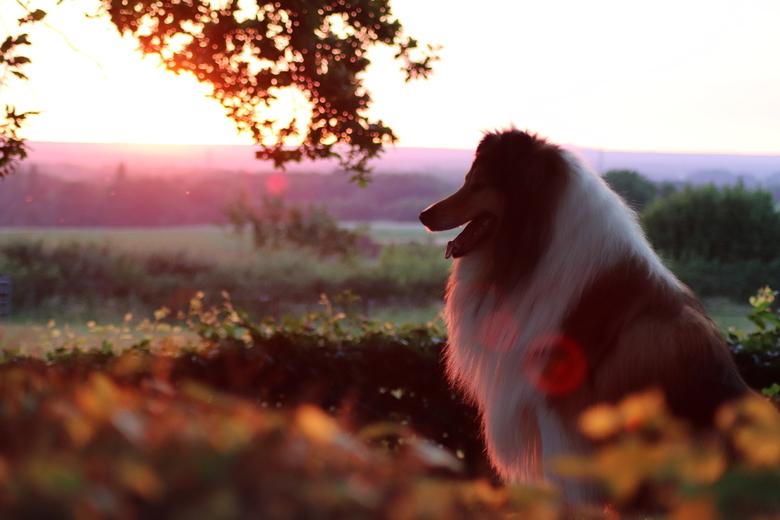 Lente avond Riley -