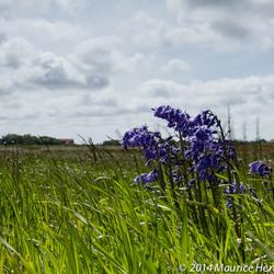 Zomerbloemen op de Lancasterdijk