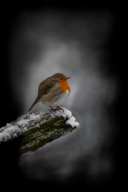 Wachten op de winter. - Zou het nog winter worden en we plaatjes met sneeuw kunnen schieten? <br /> <br /> Bedankt voor de leuke en bemoedigende rea