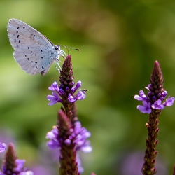 Vlinder aan de lunch-1