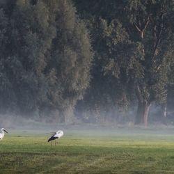 Ooievaars in het landschap