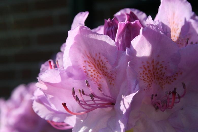 bloem -