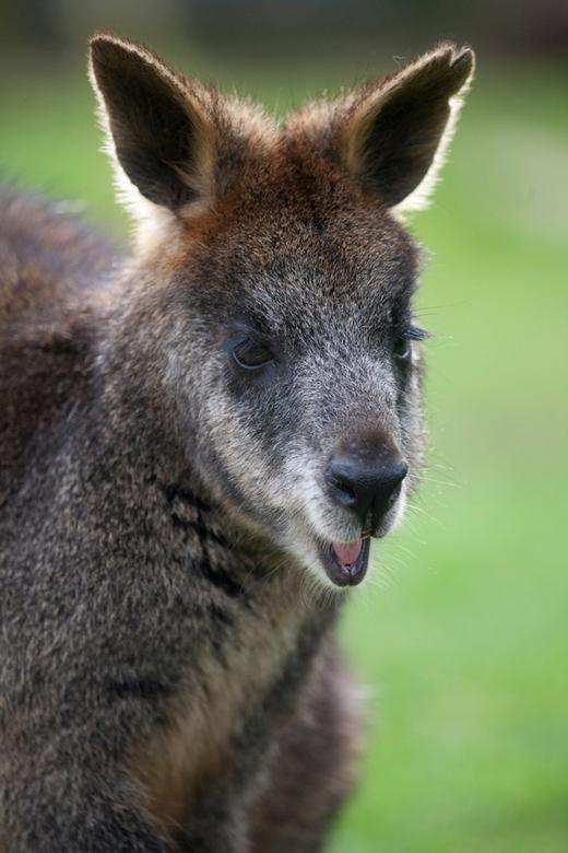 hahahahaha - Dit kangerootje besloot me uit te lachen geloof ik..