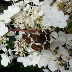 #smartphone vlinder op bloem