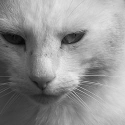 Wit in zwart-wit